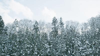 《小森林冬春篇》冬天就需要一部这样暖心暖胃的电影图片