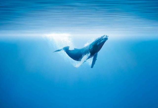 同级别无对手?微鲸D系列65D电视全国首测