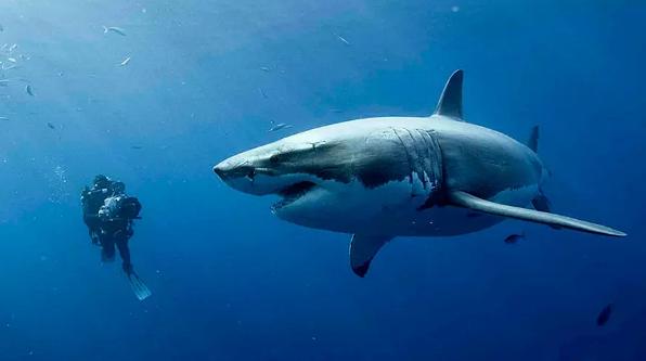 《鲨海》长腿姐妹花智斗嗜血鲨鱼,腾讯视频TV版全网首播