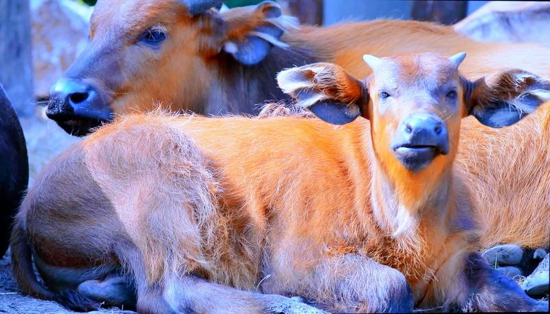 动物视觉测试图