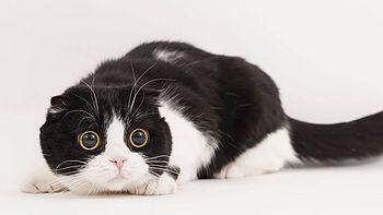 我不会拍照,但是我懂猫啊!铲屎官的主子拍照心得分享